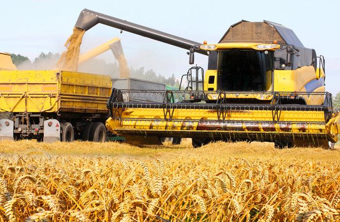 Rom�nia şi Bulgaria vor profita de restricţiile impuse de Rusia exporturilor de gr�u -(...)