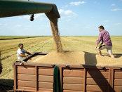 Preţul grâului, la cel mai scăzut nivel din ultimii 10 ani
