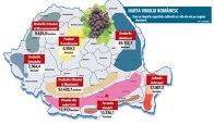 Cum se împarte suprafaţa cultivată cu viţă-de-vie pe regiuni (hectare)