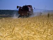Ucraina redevine grânarul Europei