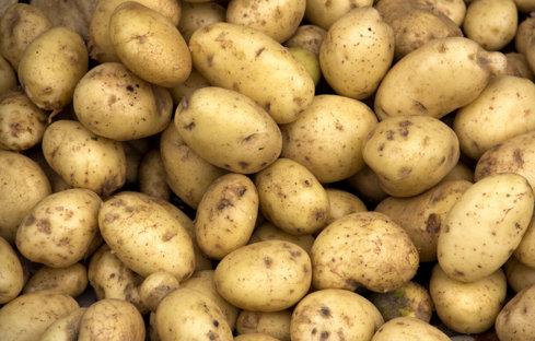 Producătorul agricol Solfarm din Covasna vinde 3.500 de tone de cartofi pe an în Auchan şi Cora