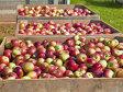 România ocupă locul doi în UE la suprafaţa cultivată cu meri, dar importă mere de 21,5 mil. euro din Polonia