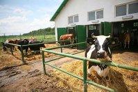 Crizele alimentare arată cum globalizarea modelează circuitul alimentar