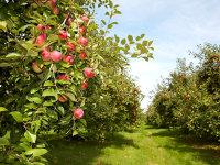 O familie din Făgăraş are afaceri de 2 mil. euro din producţia de coloranţi naturali şi arome pentru sucuri