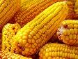 O companie italiană vrea să investească 6 milioane de euro în producţia de porumb organic fără gluten în Vukovar, Croaţia