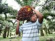 Fermierii francezi pichetează rafinăriile Total ca protest împotriva importurilor de ulei de palmier