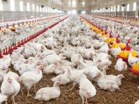 Gradus, producător de carne de pasăre, a realizat cea mai mare ofertă de vânzare de acţiuni din Bulgaria din ultimii 10 ani