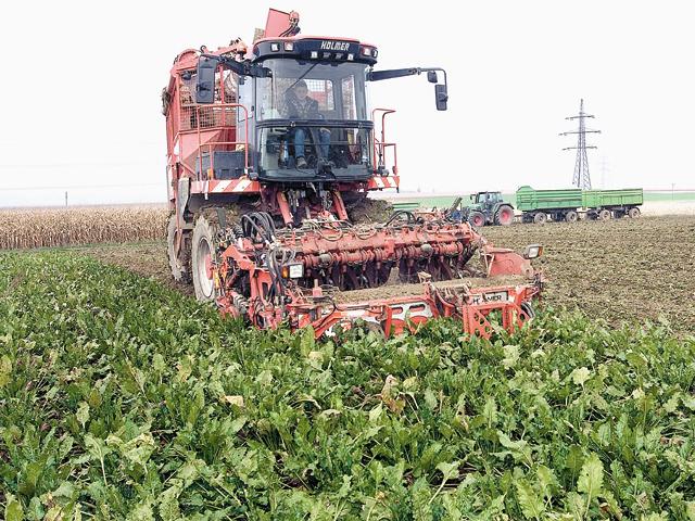 Efectul închiderilor de fabrici. Agrana: doar 30% din consumul de zahăr din România se obţine din agricultura românească