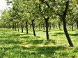 Reţeta succesului în agricultură: Plantaţia cu care reuşeşti să-ţi recuperezi investiţia de 100 de ori