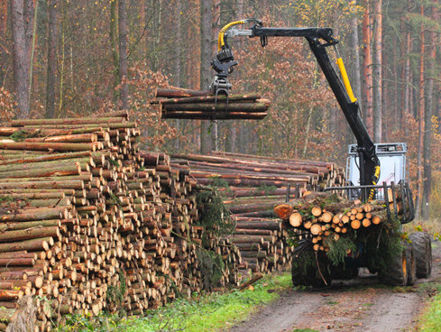 Romsilva: Volumul tăierilor ilegale de păduri înregistrează o nouă scădere