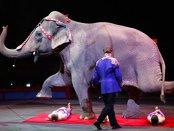 Un celebru circ cu o tradiţie de 146 de ani, care a creat spectacolele de circ modern, se închide