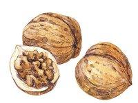 România este al doilea mare producător de nuci din Uniunea Europeană