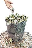 Bancherii aproape au terminat curăţarea portofoliilor de credite neperformante