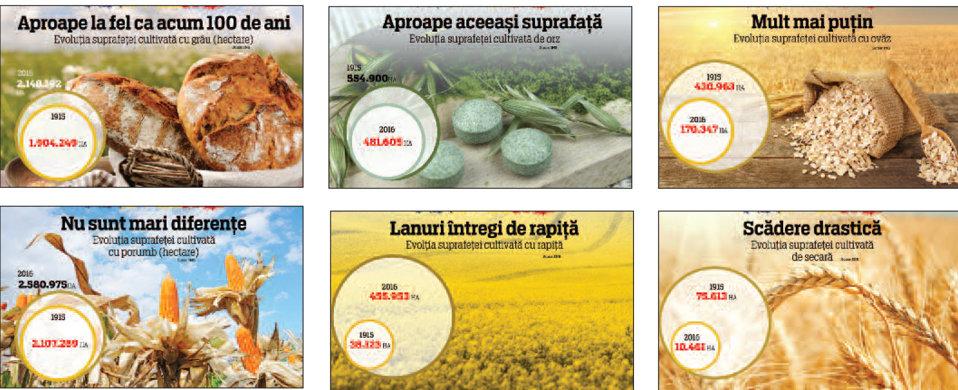Eternul potenţial agricol al României: În ultima sută de ani, suprafeţele cultivate cu grâu şi porumb au rămas aproape la acelaşi nivel. A crescut rapiţa de peste 10 ori