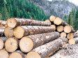 """România a pierdut într-un secol peste 10% din suprafaţa cu păduri: cine erau marii proprietari atunci şi cine controlează acum """"aurul verde"""". Ikea a ajuns al doilea cel mai mare  proprietar de păduri, cu 38.000 de hectare"""