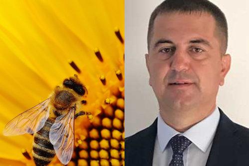 """Românii vor plăti factura neautorizării temporare a utilizării neonicotinoidelor la floarea soarelui / Arion, Pro Agro: """"Apicultorii nu vor avea unde să-şi ducă stupii"""""""