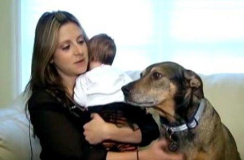 Un câine luat dintr-un adăpost a salvat de la moarte fetiţa de doar 9 luni a stăpânilor săi. VIDEO