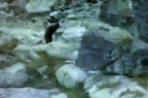 Misterul lui Yeti ar fi fost elucidat - legendara creatură ar putea fi un urs hibrid