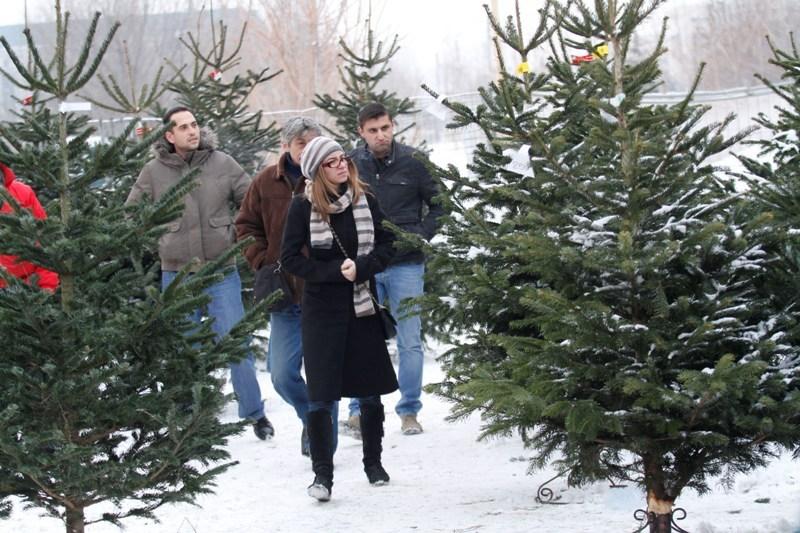 De ce brazii de Crăciun aduşi din import miros diferit de cei româneşti