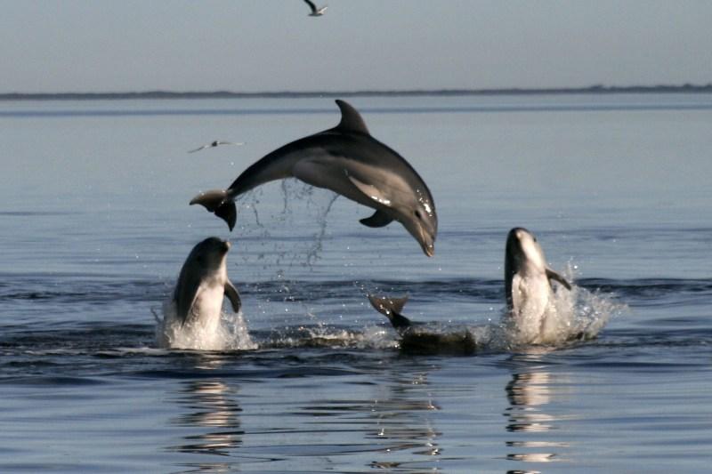 Un delfin cu două capete a fost descoperit pe o plajă din Turcia. FOTO