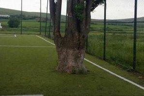 """Acesta este satul din România care a ajuns """"de râsul întregii lumi"""". Iar copacul din imagine nu este singurul motiv"""