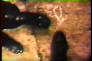 Un fermier a găsit pe câmp o cameră de filmat. Când a văzut imaginile, FBI a deschis o anchetă. Detaliul incredibil pe care l-au descoperit după un an