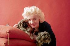 Fotografii nemaivăzute cu Marilyn Monroe. Imaginile în premieră care o arată pe celebra actriţă aşa cum nu a mai apărut niciodată