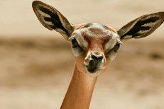 Atlasul creaturilor ciudate: 13 animale despre care nu ştiai că există