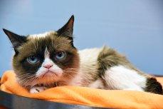 Despăgubire uriaşă pentru Grumpy Cat. Imaginea celei mai faimoase pisici din lume, folosită ilegal