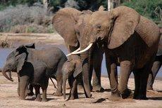 Pe cât sunt de mari, pe atât sunt de fricoşi. Elefanţii se tem de unele dintre cele mai mici vietăţi de pe Pământ