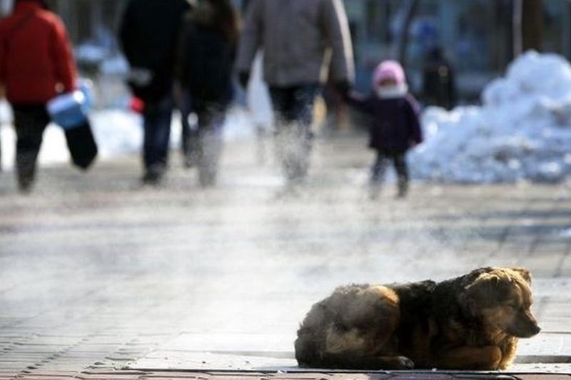 Cauza ştiinţifică a gerului şi ninsorilor care au pus stăpânire pe Europa în această săptămână