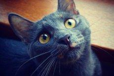 Un lucru interesant despre felinele noastre preferate: mieunăturile pisicii îţi sunt adresate doar ţie