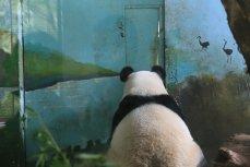 Cât au ajuns să COSTE tablourile pictate de un URS PANDA. Vezi de unde poţi ACHIZIŢIONA o lucrare