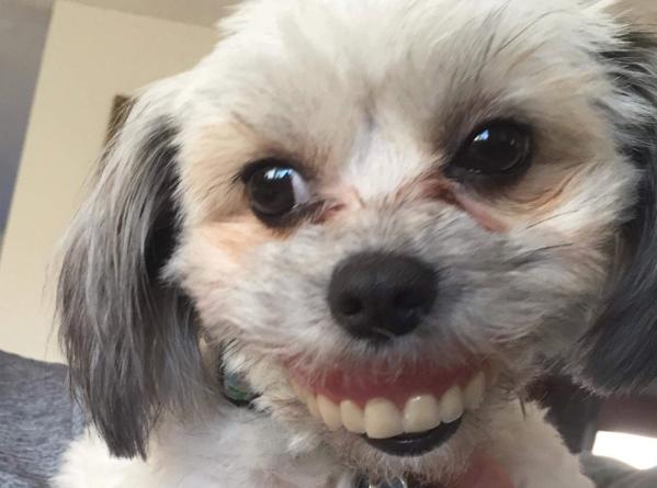 Aveți grijă unde vă lăsați proteza dentară! Un bărbat a trăit șocul vieții, după ce și-a găsit dinții în gura câinelui