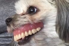 Aveţi grijă unde vă lăsaţi PROTEZA! Un bărbat a trăit şocul vieţii, după ce şi-a găsit dinţii în gura CÂINELUI