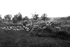 De la FOCURI DE TUN, LA CIRIPIT de păsărele. MOMENTUL când se încheie Primul Război Mondial a fost ÎNREGISTRAT