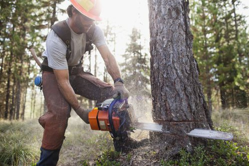 Un bărbat s-a apucat să taie un copac cu drujba, când lama a trecut prin CEVA neaşteptat. A chemat imediat ajutoare, iar povestea are un final fericit | VIDEO