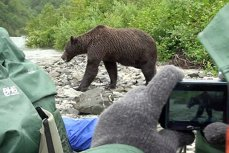 Cât de mult s-a apropiat un urs grizzly de un grup de turişti