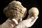 O stridie veche de 145 de milioane de ani pune pe gânduri cercetătorii. Ce avere s-ar putea ascunde în cochilie