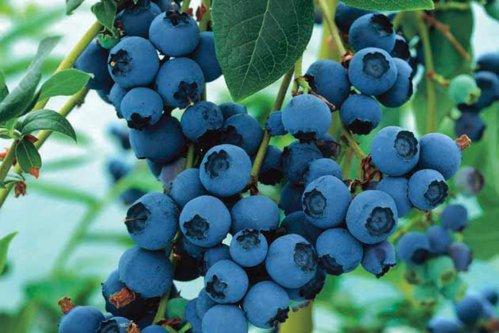 7 motive pentru a mânca afine