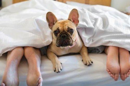 Cât de sănătos este să dormi în pat cu animalul de companie