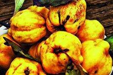 Fructul de toamnă cu 100 de proprietăţi benefice pentru sănătate