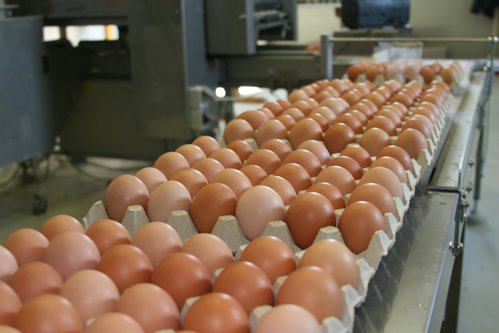 Peste 100.000 de ouă INFESTATE CU FIPRONIL au ajuns în CONSUM: DSVSA Teleoroman ar fi trebuit să anunţe situaţia DIN DECEMBRIE
