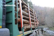 HARTA defrişărilor ilegale. Trei hectare de pădure dispar în fiecare oră în România