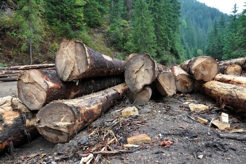 Cum a ajuns să dispară metru cu metru pădurea unei comune din Bistriţa, în timp ce autorităţile dau vina unele pe altele