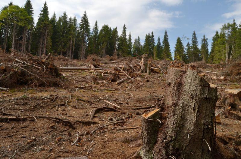 Pădurile de unde