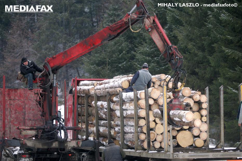 """În timp ce 3 hectare de pădure dispar în fiecare oră, parlamentarii se ceartă pe """"amenzile uriaşe"""" pentru tăierile ilegale"""