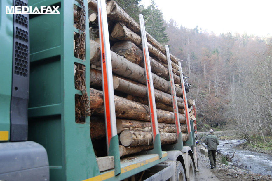 HARTA defrişărilor ilegale. Topul judeţelor în care pădurile dispar pe zi ce trece