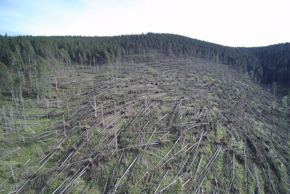 Zeci de mii de hectare de pădure, afectate de fenomenele meteorologice extreme. FOTO