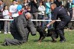 Hoţii din Bucureşti au devenit mai timizi în 2012. Ce planuri are Poliţia Capitalei